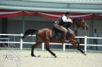 Working Equitation vs Horseball 2011 - Perfect Shot